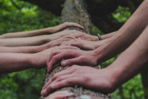 Hände verschiedener Menschen an einem Baum